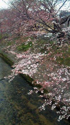3月23日・奈良県桜井市にて撮影.jpg