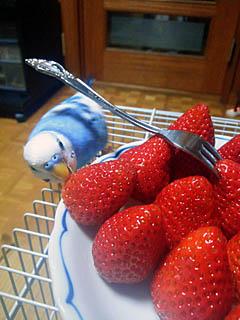 イチゴ大好き.jpg